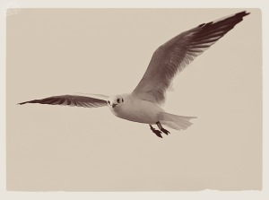 DAY 263 - See Gull 1